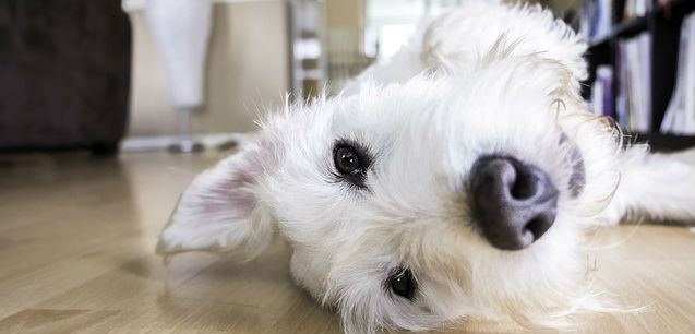 Is incontinence in young female dogs possible?