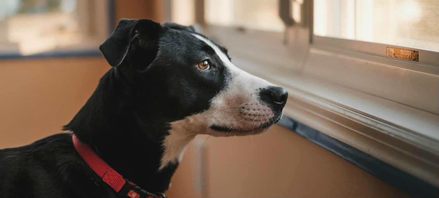 What are some tips on how to help a dog with separation anxiety?