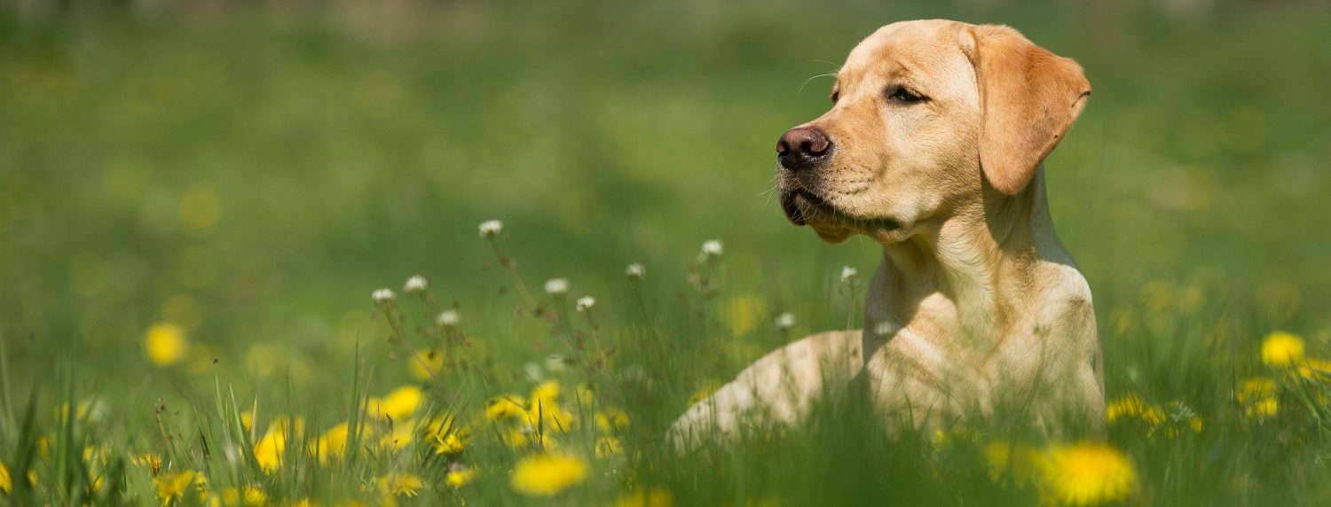 What are strategies to minimize the risk of a dog being bitten by a tick?