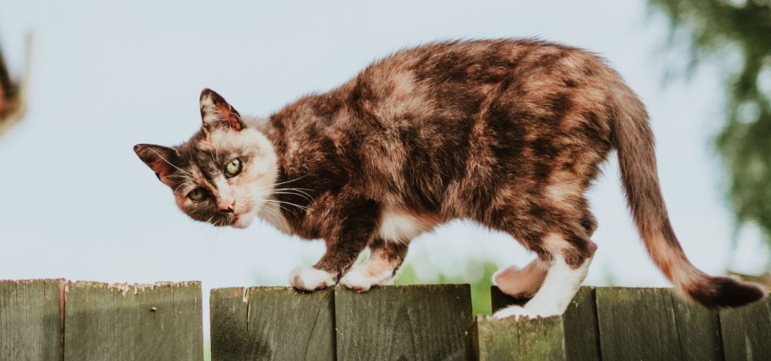 Should we re-trap a feral cat that's injured or is there something else we can do?