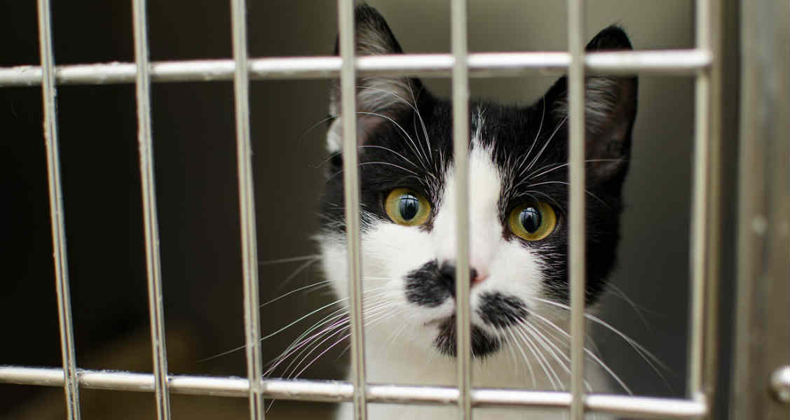 8 Reasons to Adopt a Shelter Cat