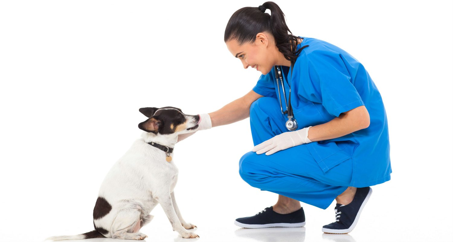 How much does a consultation and physical exam cost and what should I look for when choosing a vet?