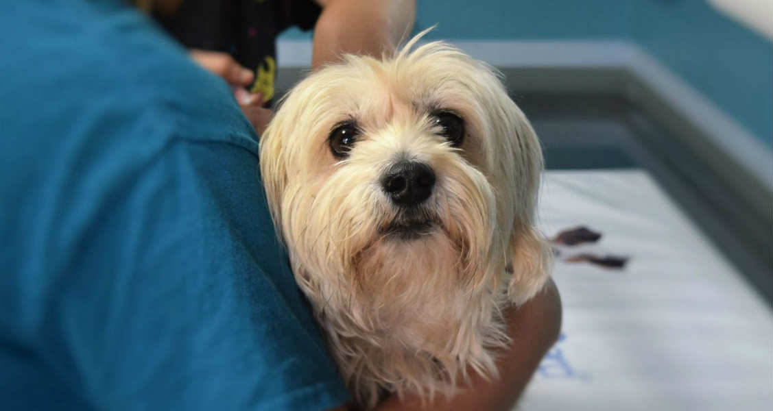 Treating a Diabetic Pet – Not as Bad as You Think