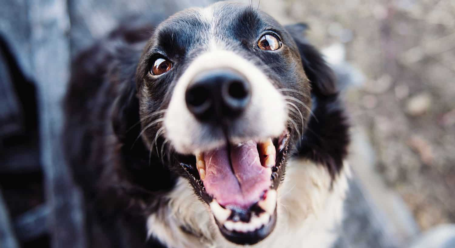 My dog has bad breath. What is the cause and treatment?