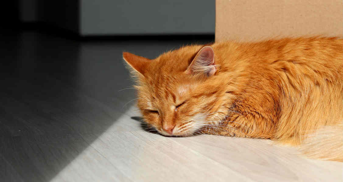 Cats and Sleep: How Much Do They Really Need?