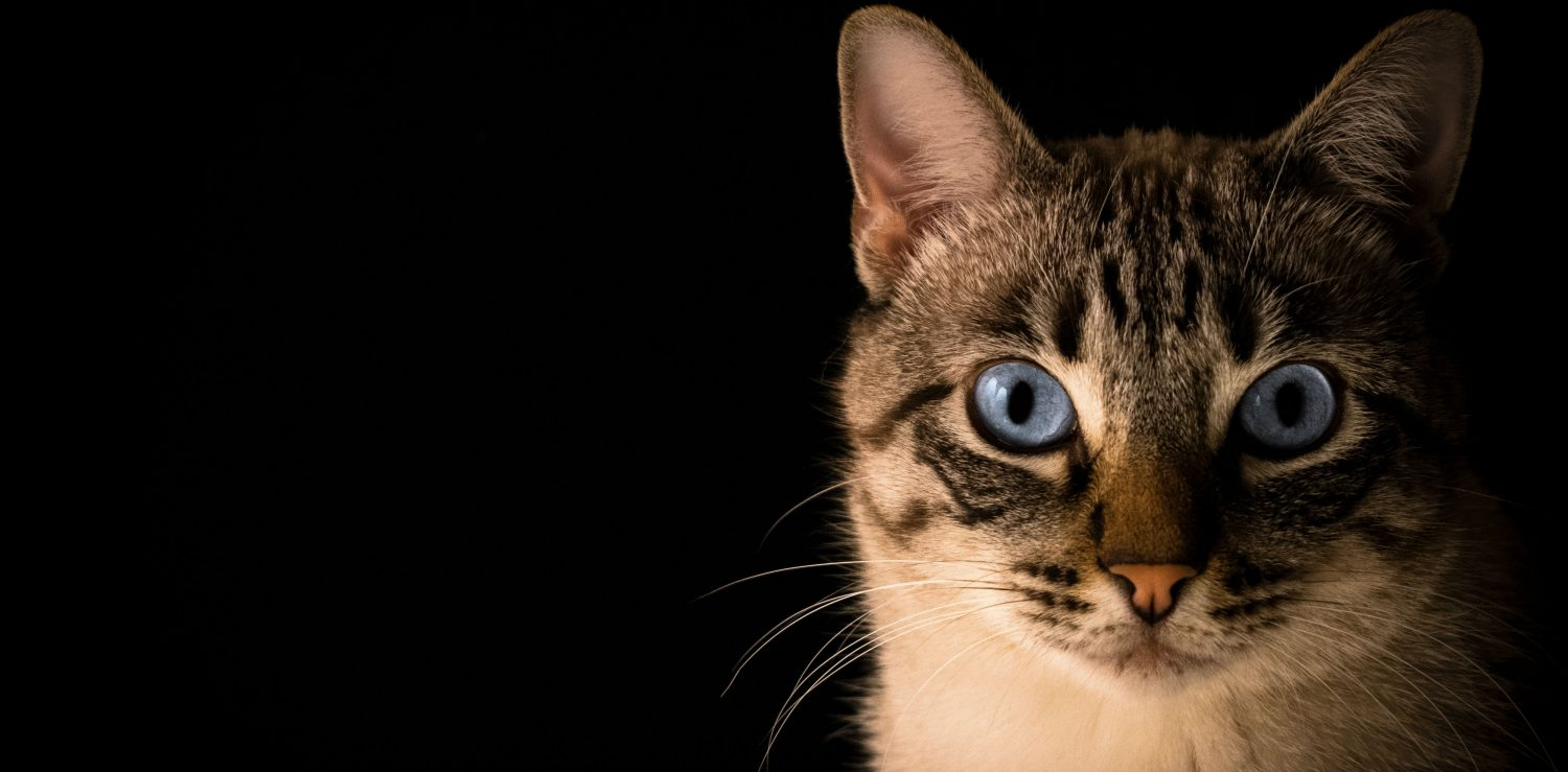 Is there an over-the-counter eye drop to treat the symptoms of entropion in a cat? What are the causes and treatment for this disease?