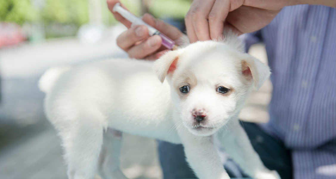 5 Reasons to Vaccinate Your Dog