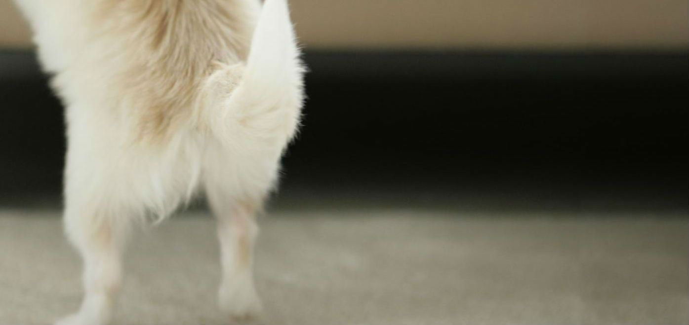 What causes loose stools in dogs?