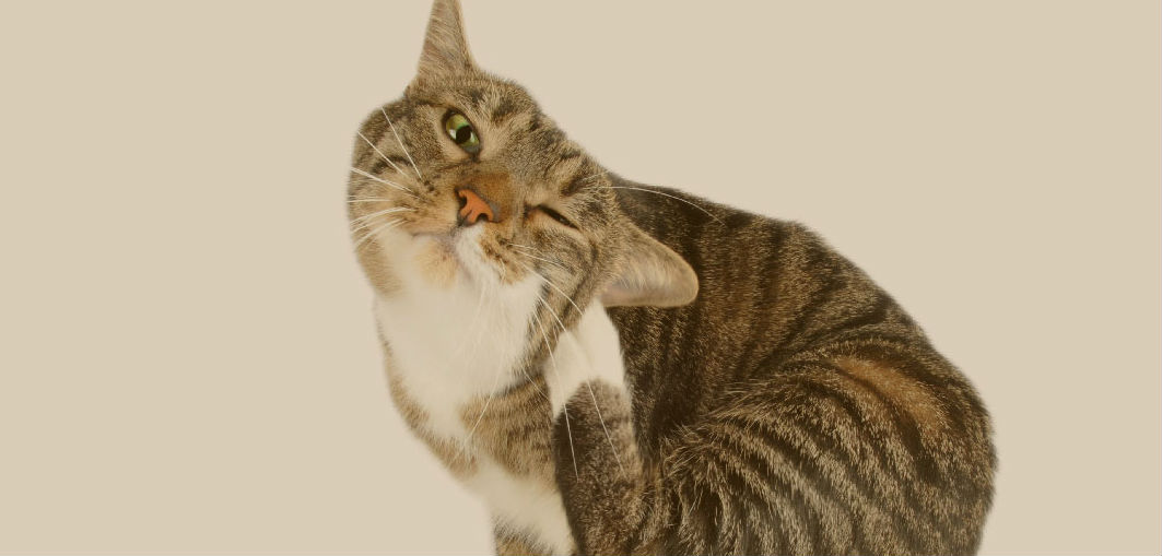 What are some strategies to help with my cat's dander problem?