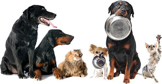 Understanding Pet Food