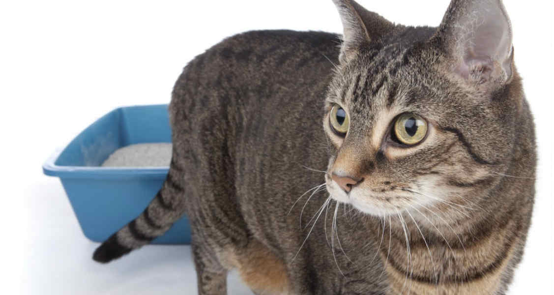 Urinating Outside the Litter Box in Cats: Causes & Treatment