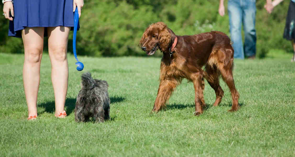 Dog Parks – The Good, The Bad, & The Furry