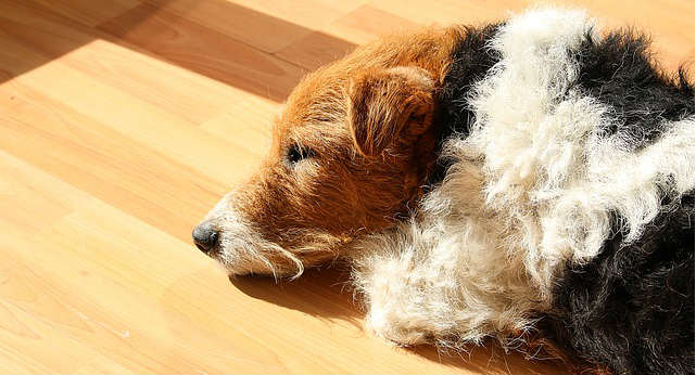 What causes elevated liver enzymes in dogs?