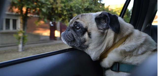 How can I sedate my dog for travel?