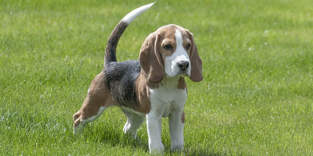 What are some tips on potty training puppies?