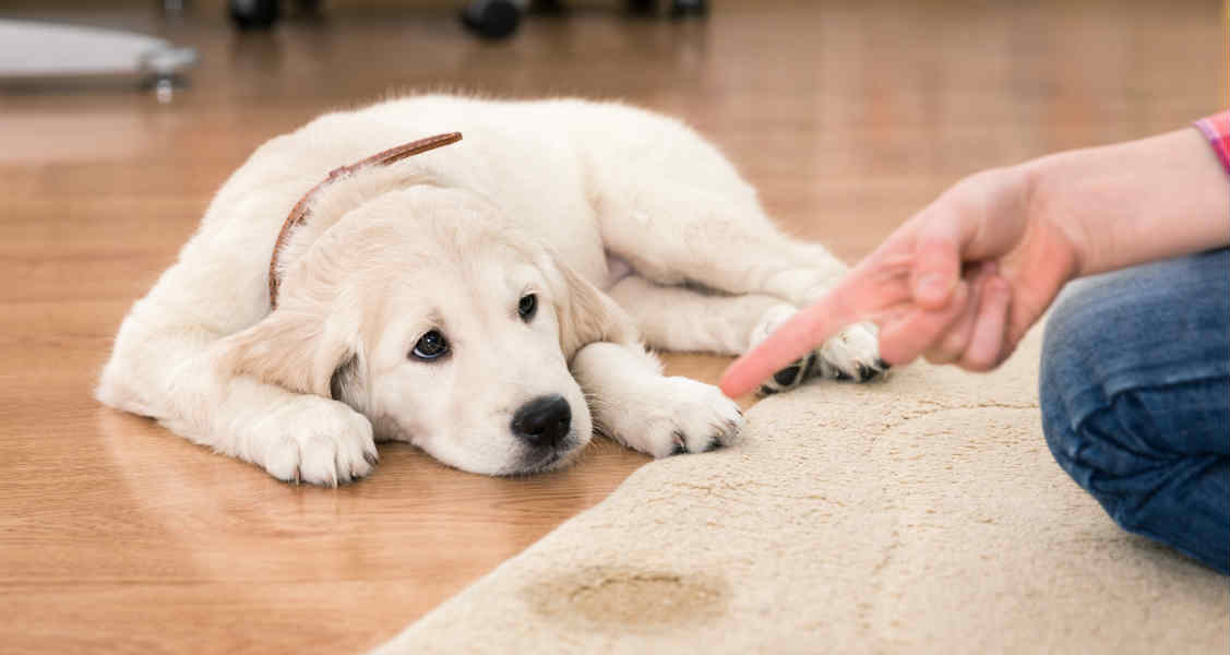Common Causes of Urinary and Fecal Incontinence in Dogs