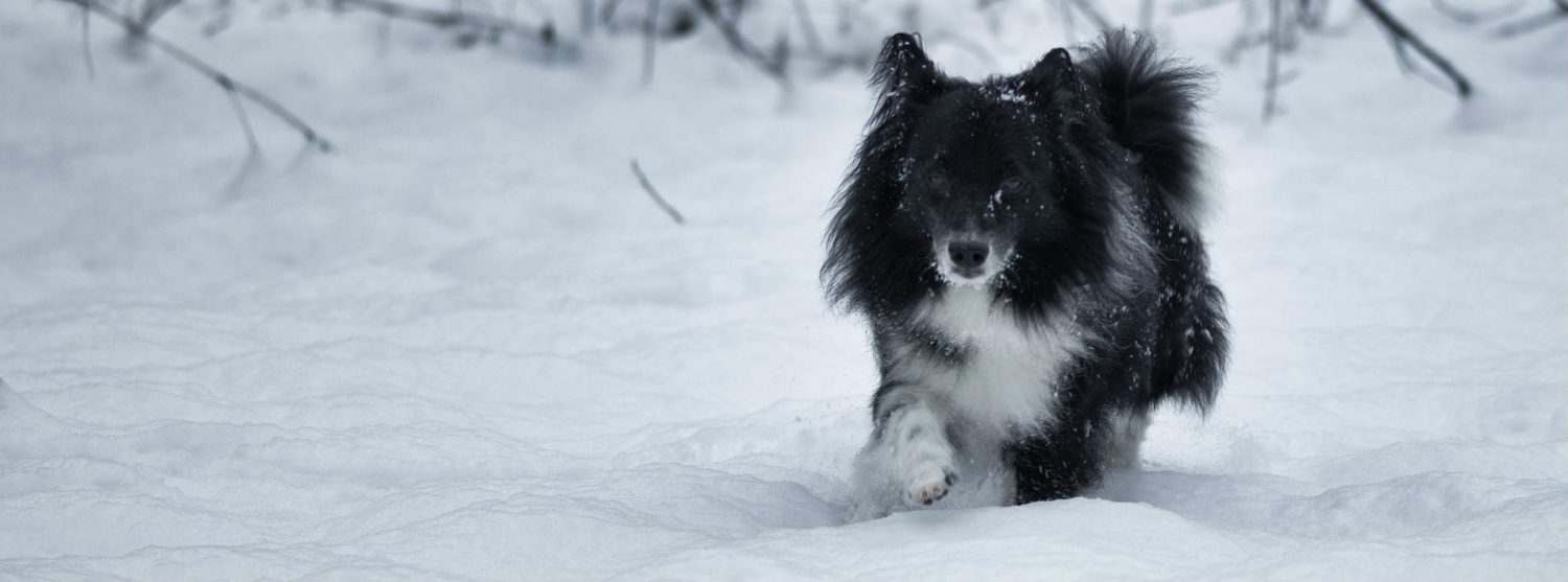 What are some different ways of treating arthritis in dogs?
