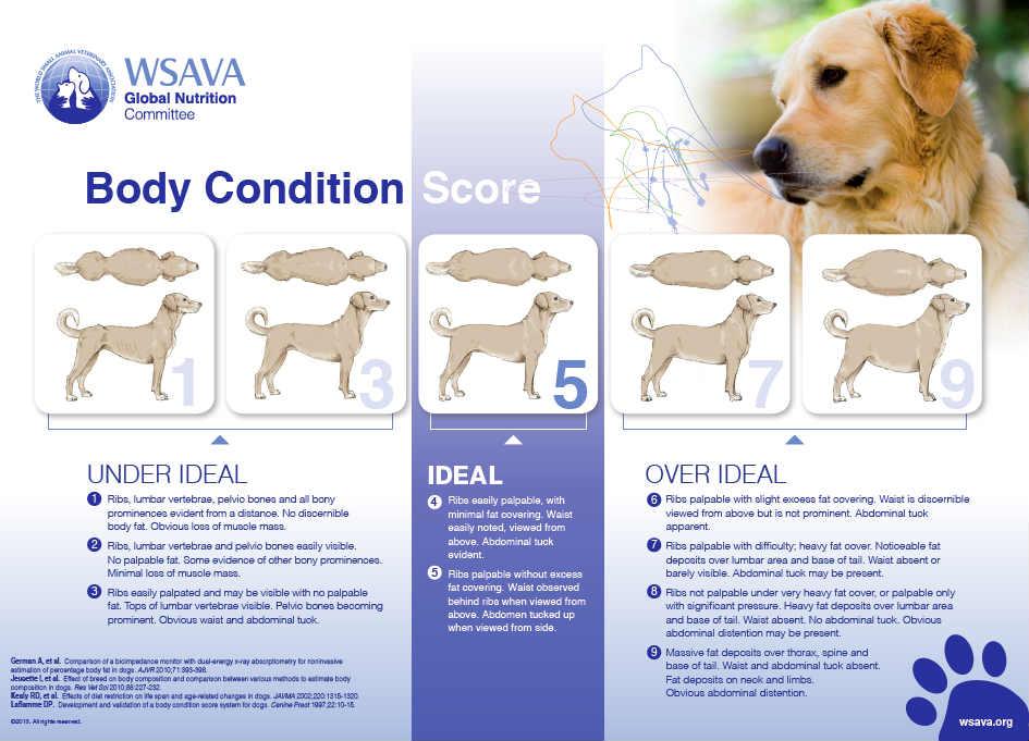 Canine Body Condition Score