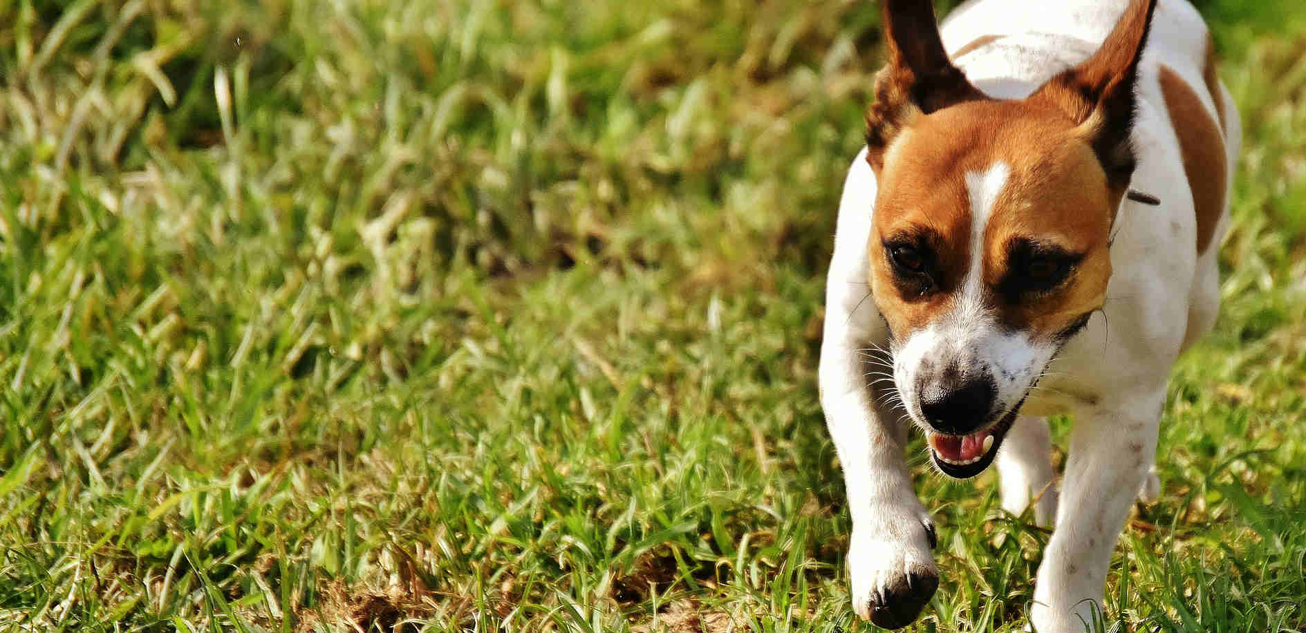 Is it safe to use cannabis or CBD oil for seizures in dogs?