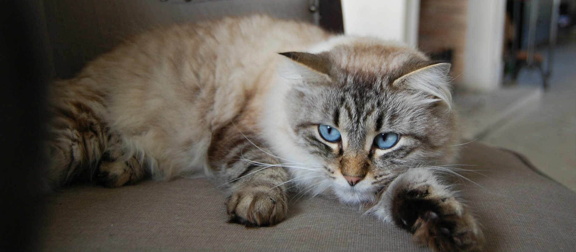 What are some common cat health problems I should be aware of?