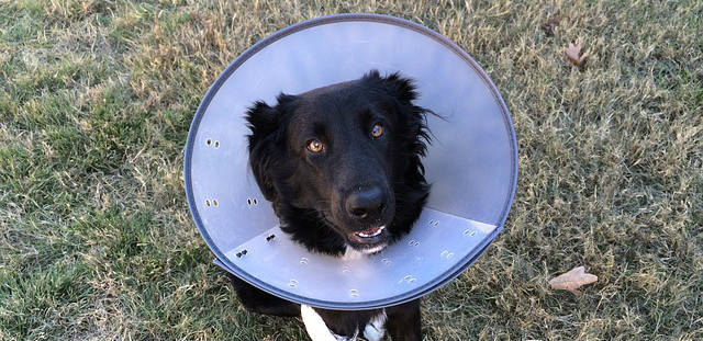 How are mammary tumors in dogs diagnosed?