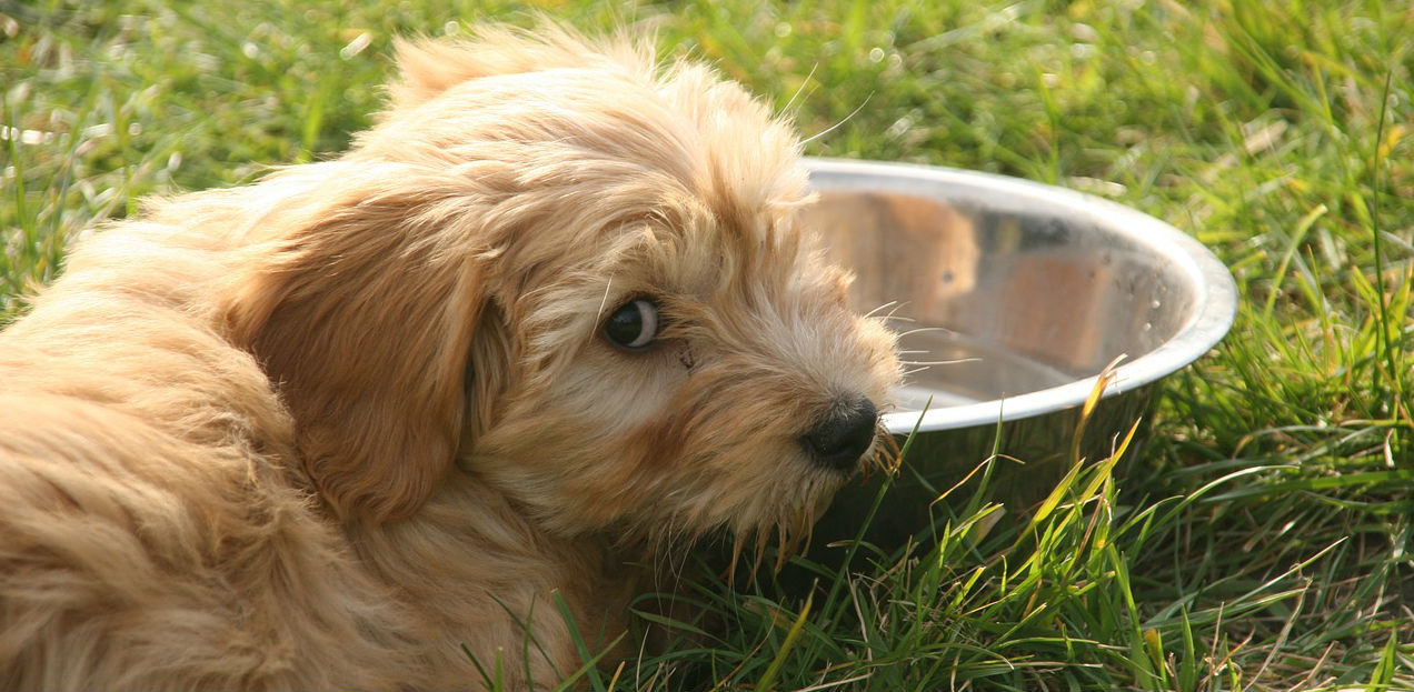 What causes bladder stones in dogs and how can they be prevented?