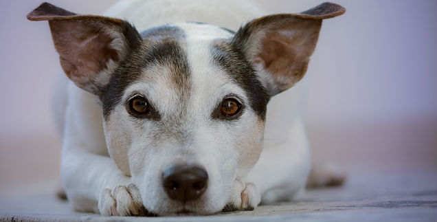 What causes eye discharge in dogs? What's the treatment?
