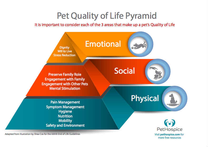 Pet Quality of Life Pyramid