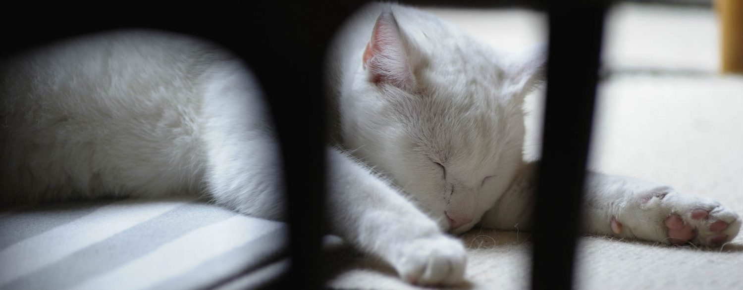 Why do cats flick their paws after vaccination?