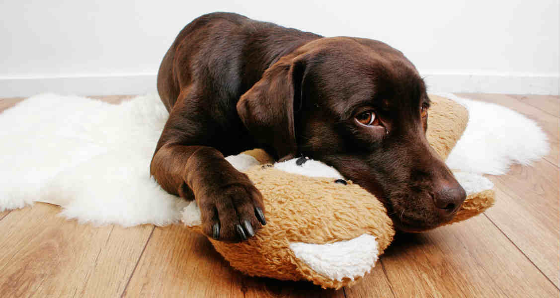 The Best Ways of Reducing Anxiety in Dogs