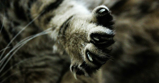 What are some tips on how to trim a squirmy cat's nails?