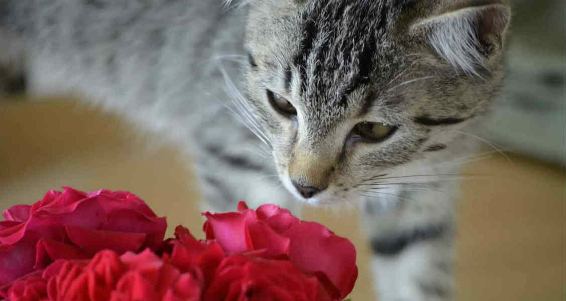 Valentine's Day Safety Tips for Pets