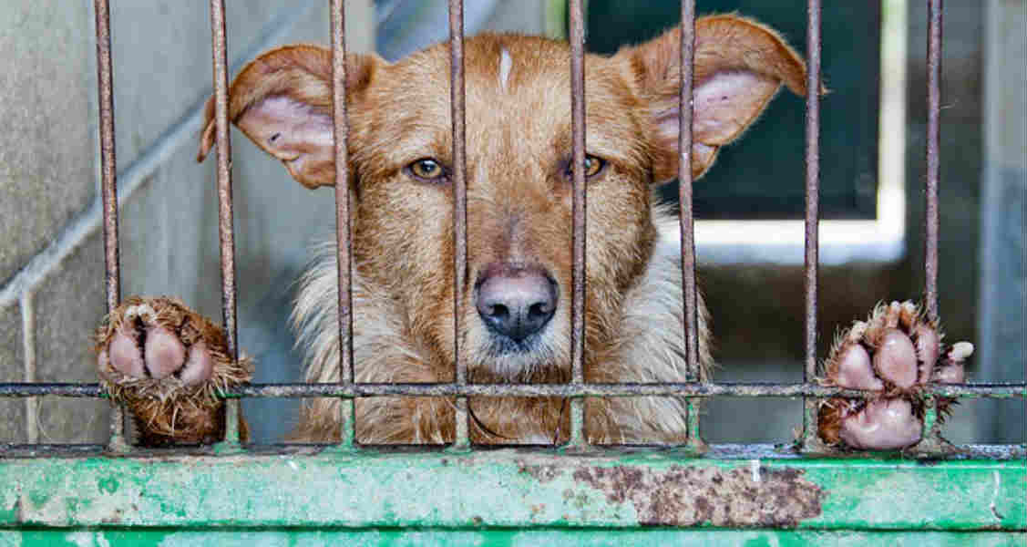 Signs and Types of Animal Abuse and How to Stop It