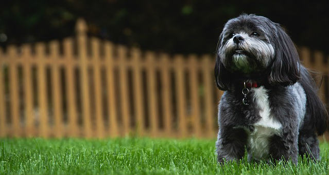 Could revolution for dogs have caused an allergic reaction in my puppy?