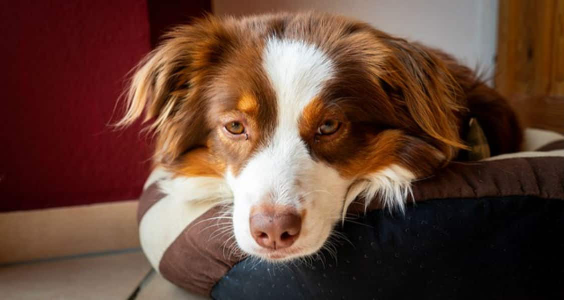 6 Signs You May Have a Sick Dog