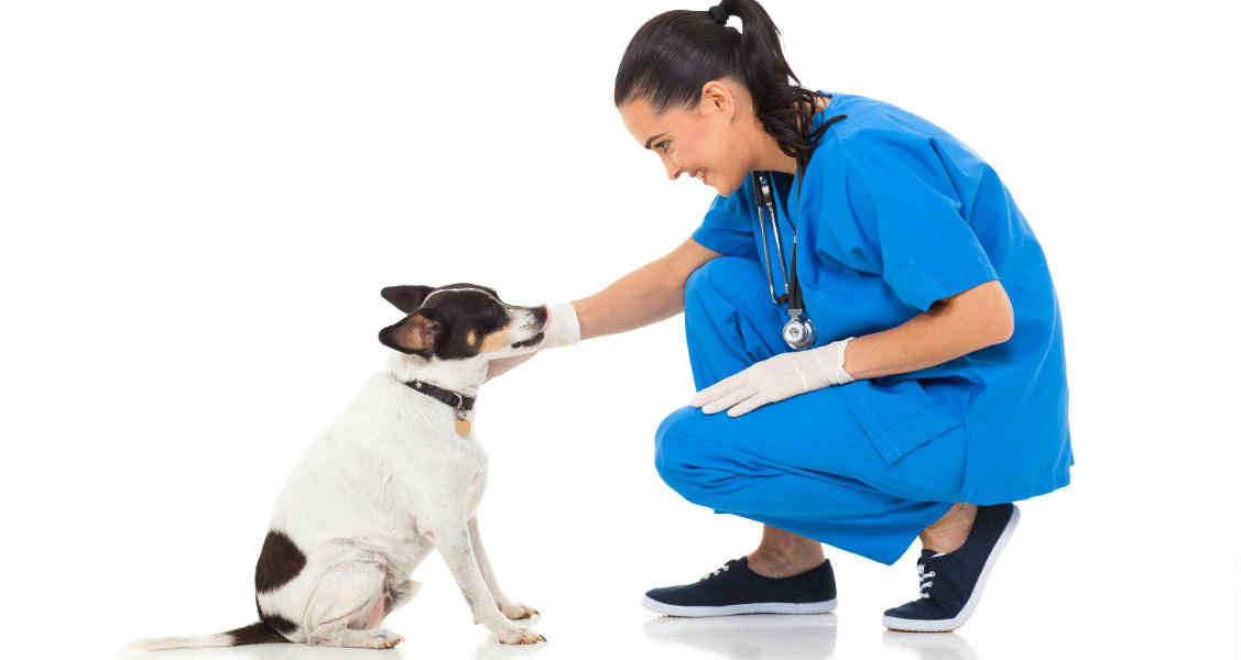 A Yearly Preventive Care Checklist for Dogs and Cats