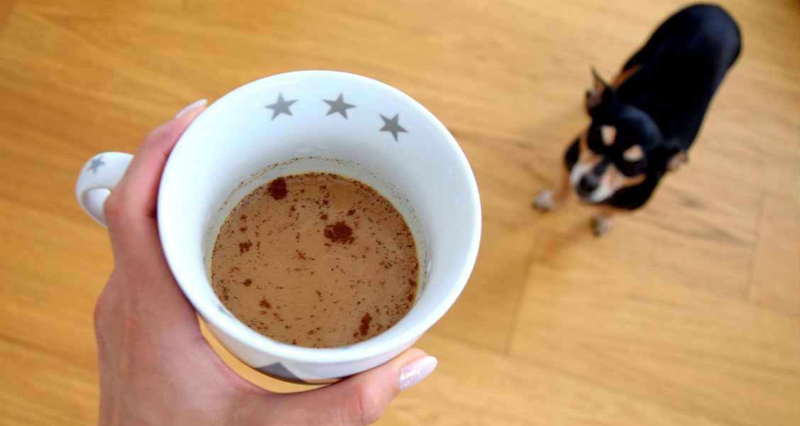What to Do If Your Cat or Dog Ingests Coffee