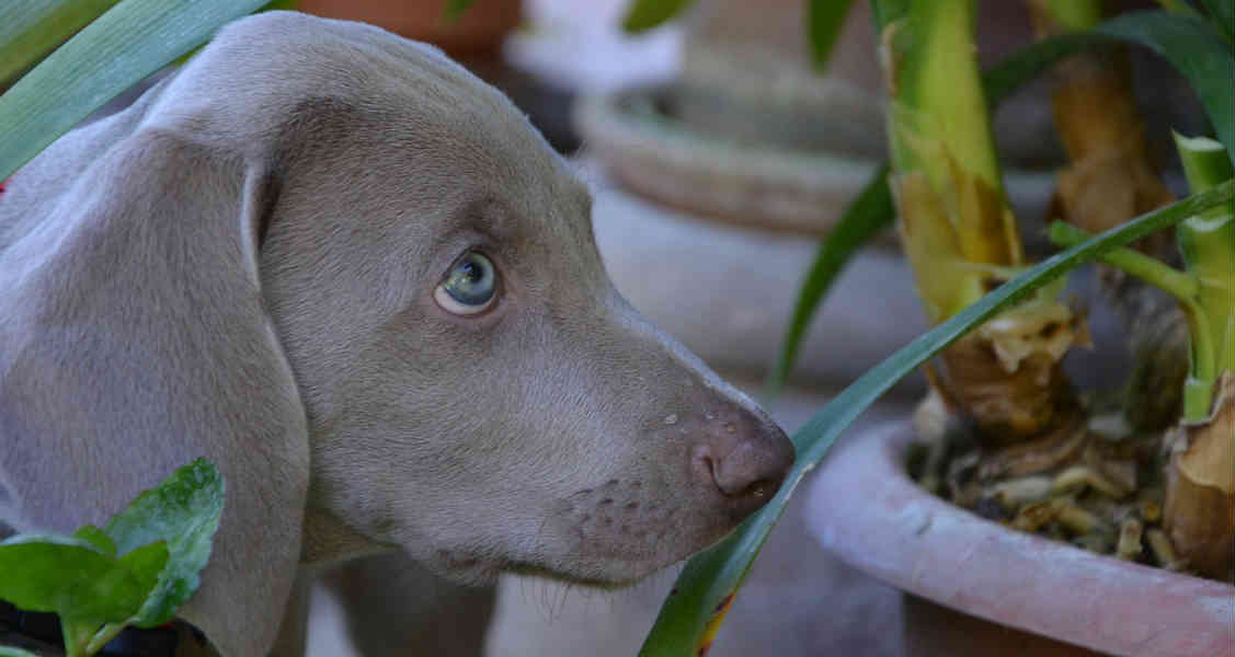 18 Common Houseplants That Are Poisonous to Cats and Dogs