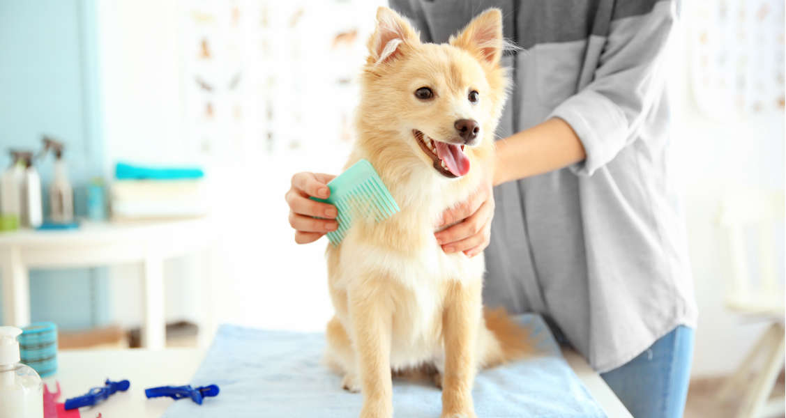 Cat and Dog Grooming Schedule: Bathing, Brushing, Ear Cleaning & More