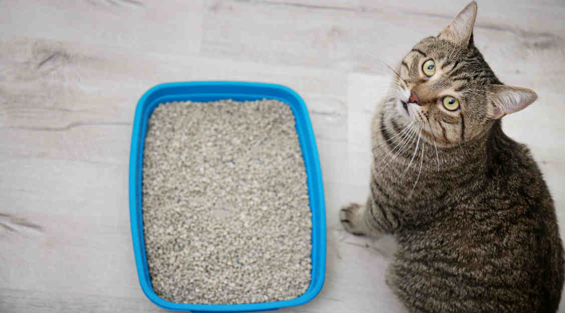 9 Effective Cat Constipation Remedies