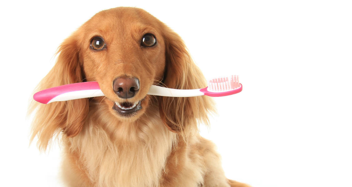 Common Pet Dental Care Questions