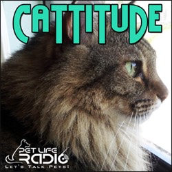 Cattitude podcast cover art