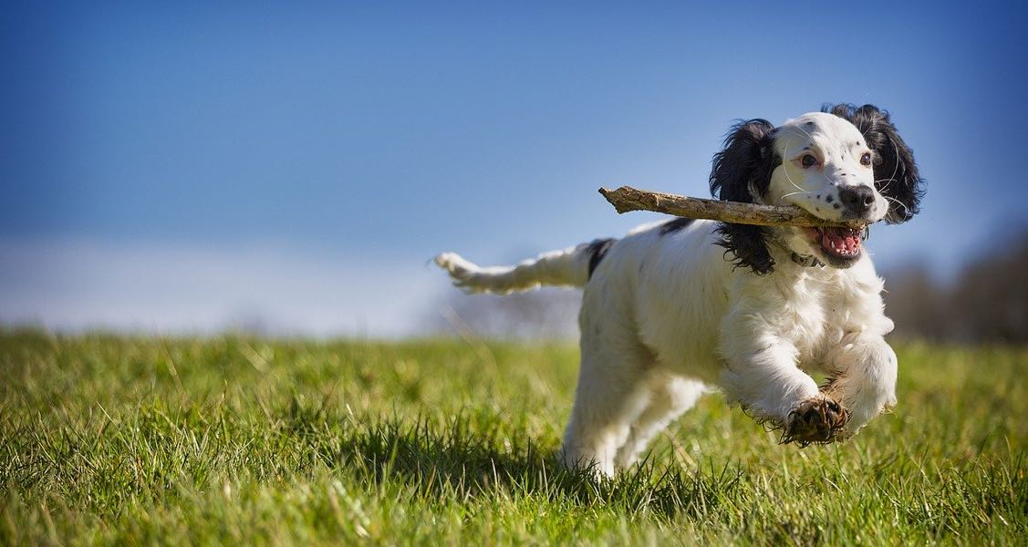 Go Fetch! Top 10 Pet Podcasts For Dog & Cat Owners