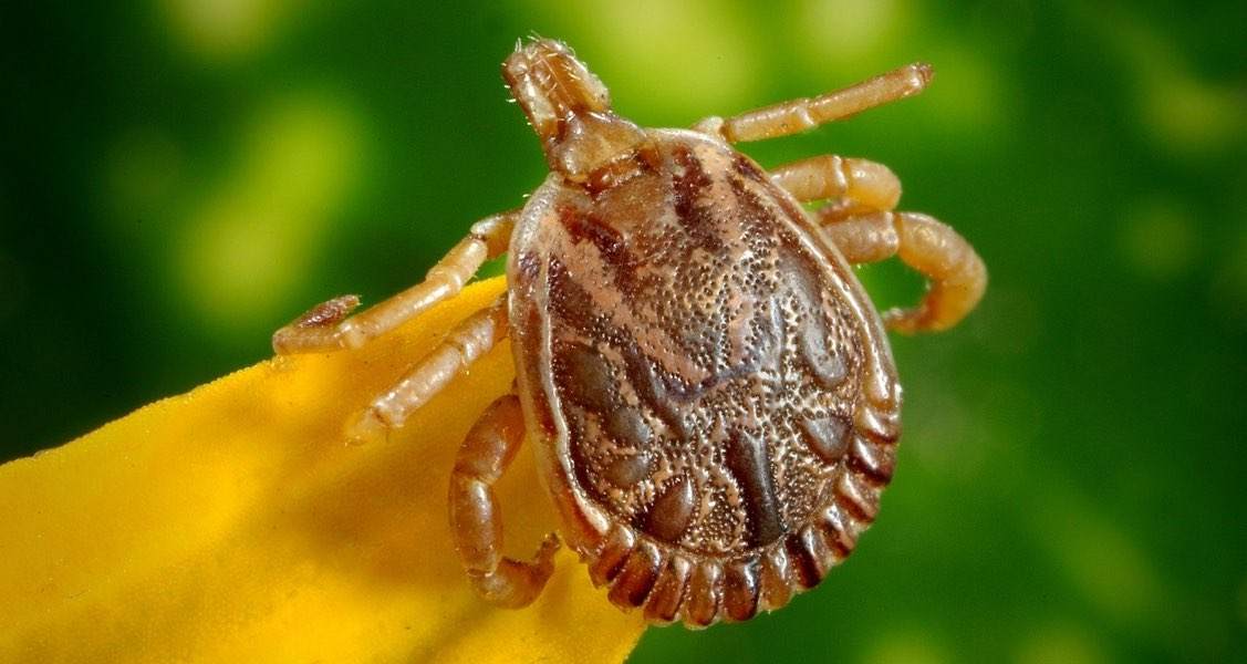 Cases of Canine Lyme Disease on the Rise