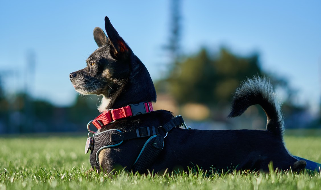 New Fur-Friendly Wearable Helps You Track Your Pet's Health