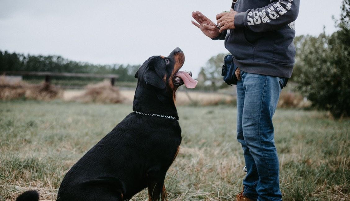 Dog Training Basics: The Beginner's Guide to Training Your Dog