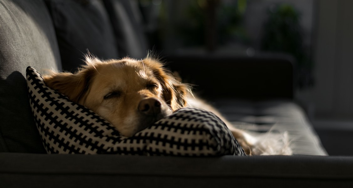What should I do if my pet dies at home?
