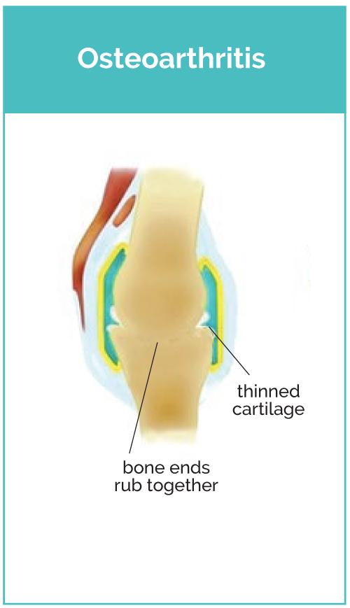 Osteoarthritis Dog Joint