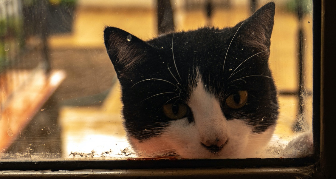 How to Identify and Treat Separation Anxiety In Cats