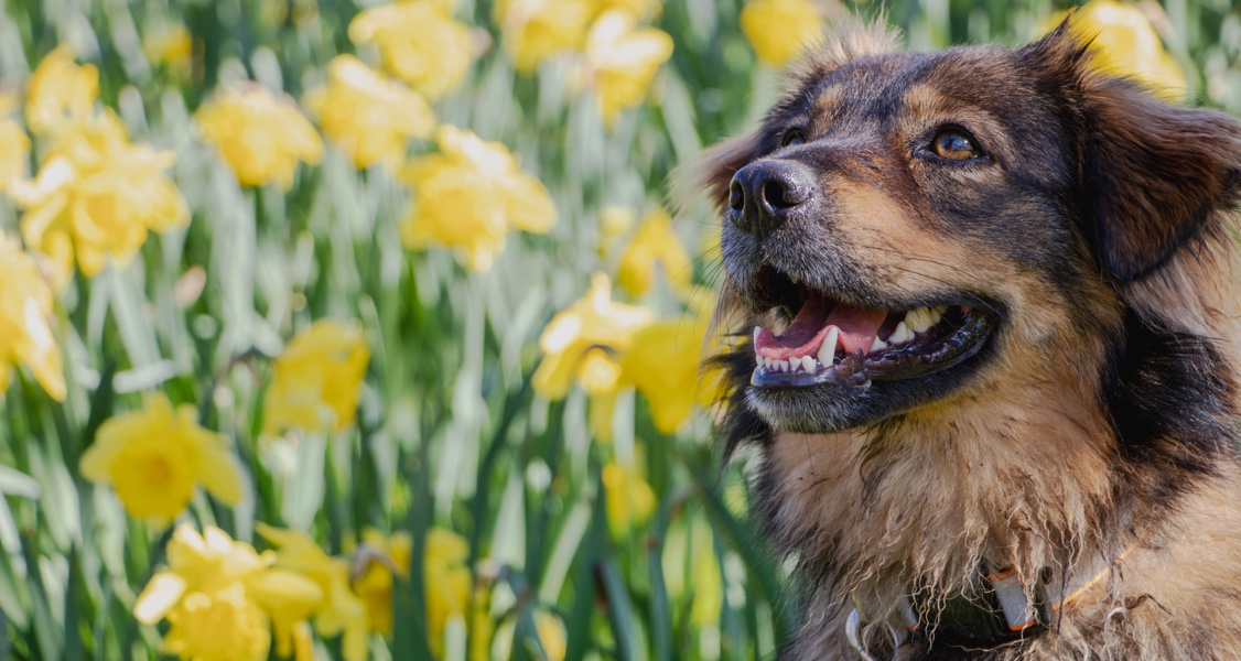 Can Dogs Get Hay Fever? A Complete Guide